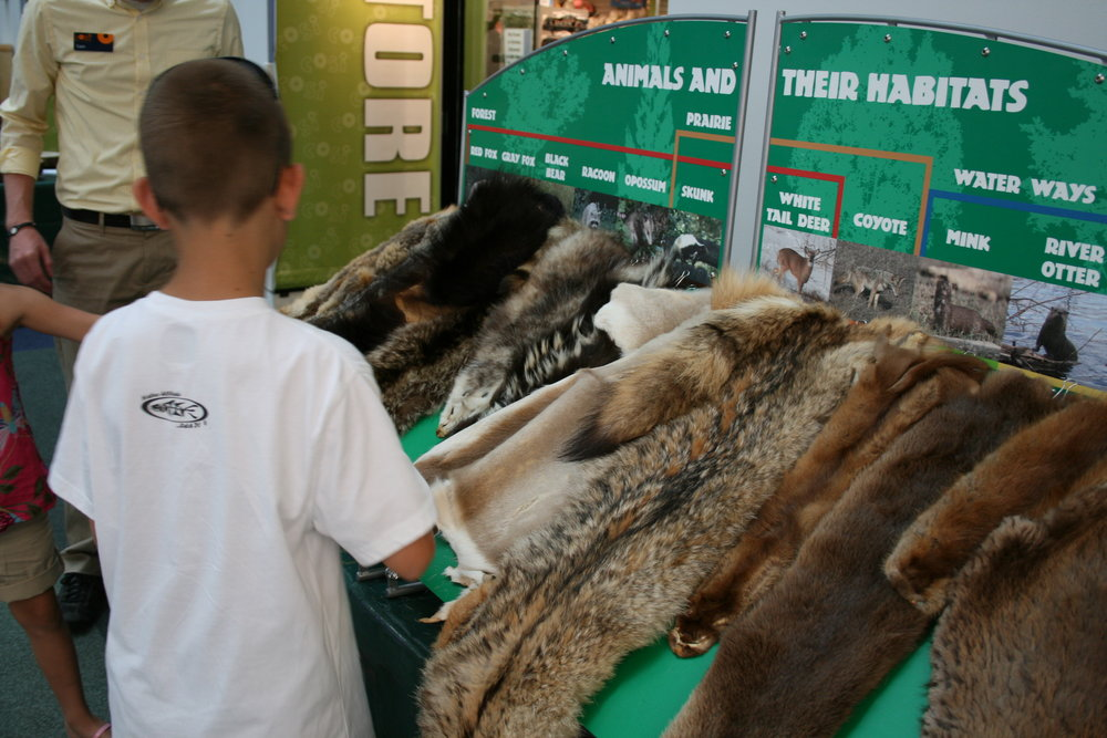 Animal furs displayed to explain specific adaptations.