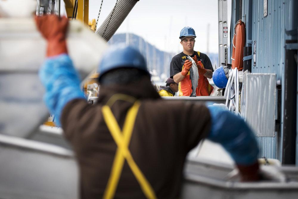 170721_Alaska - Salmon CanneryAH_0235.jpg