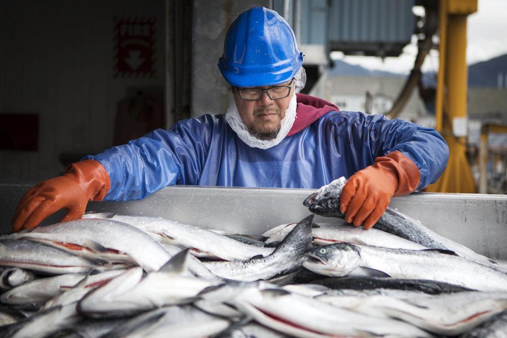 170721_Alaska - Salmon CanneryAH_0125.jpg