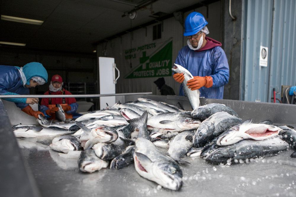 170721_Alaska - Salmon CanneryAH_0072.jpg
