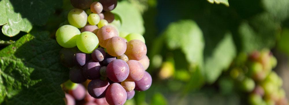 Tamar Valley Wine Route George Town Tasmania