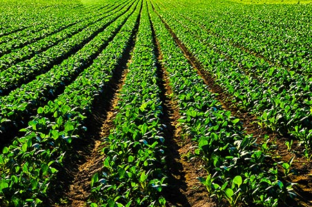 > Agropecuario