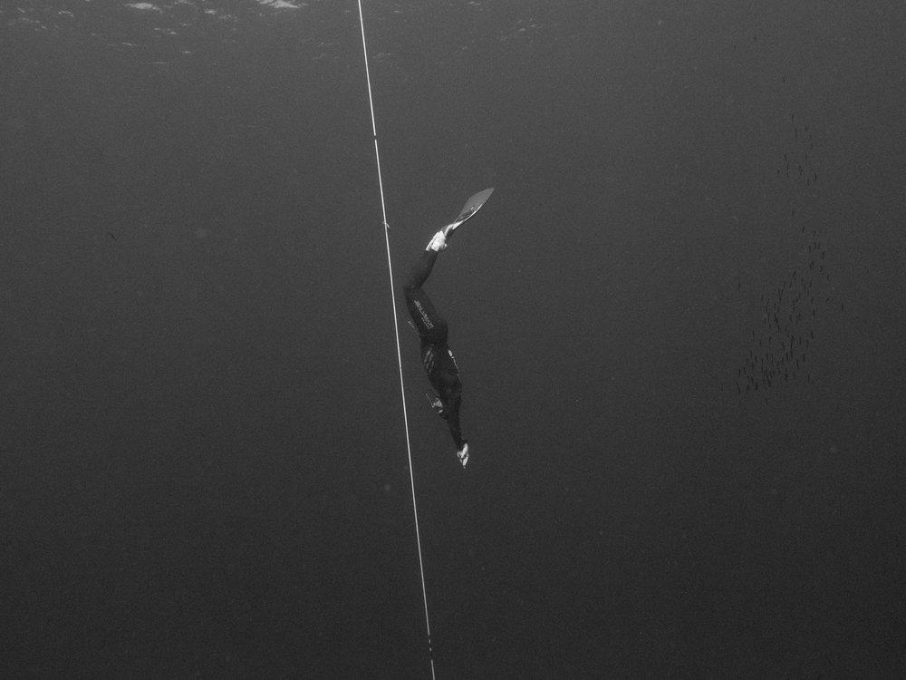 ant judge monofin freediving
