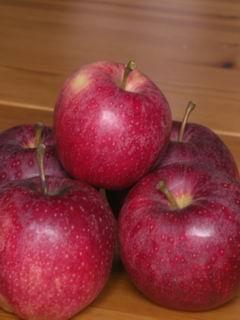 林檎の季節です