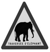 traversee elephant