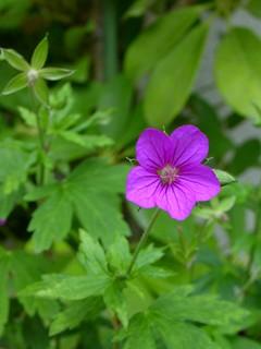 ptt fleur
