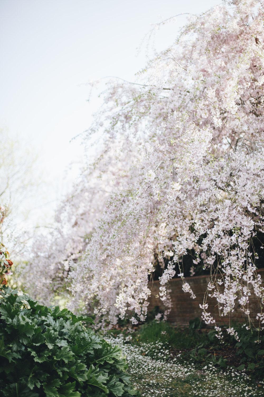 Instagram Spring-15.JPG
