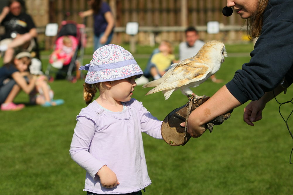 Dwf petting zoo boy with owl.JPG