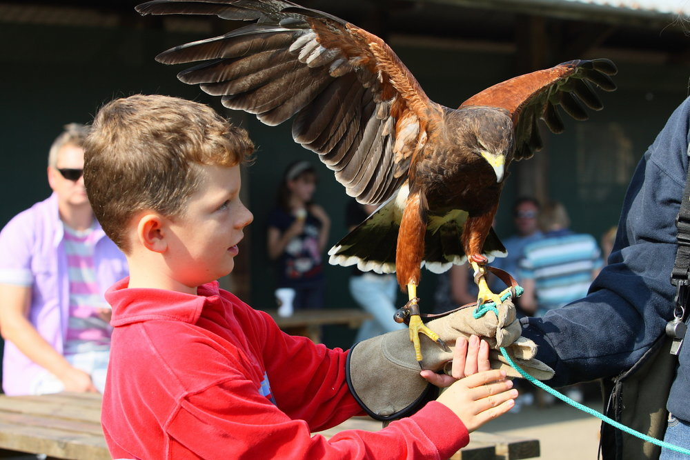 Dwf petting zoo boy with hawk.JPG