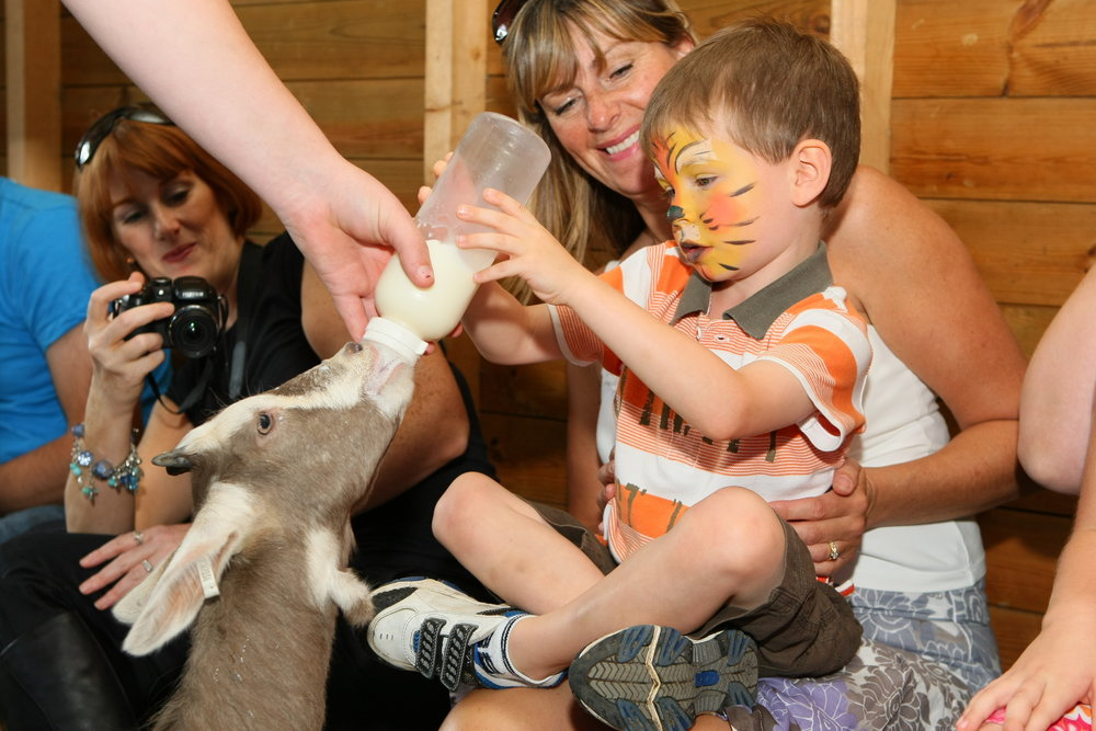 Dwf petting zoochild and goat with face paint.JPG