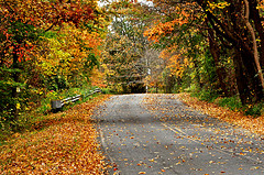Autumn-28-Oct-2012.jpg