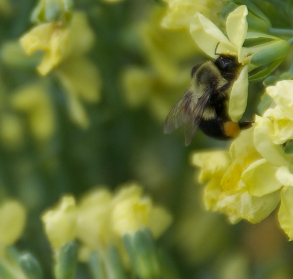 honeybee-small.jpg