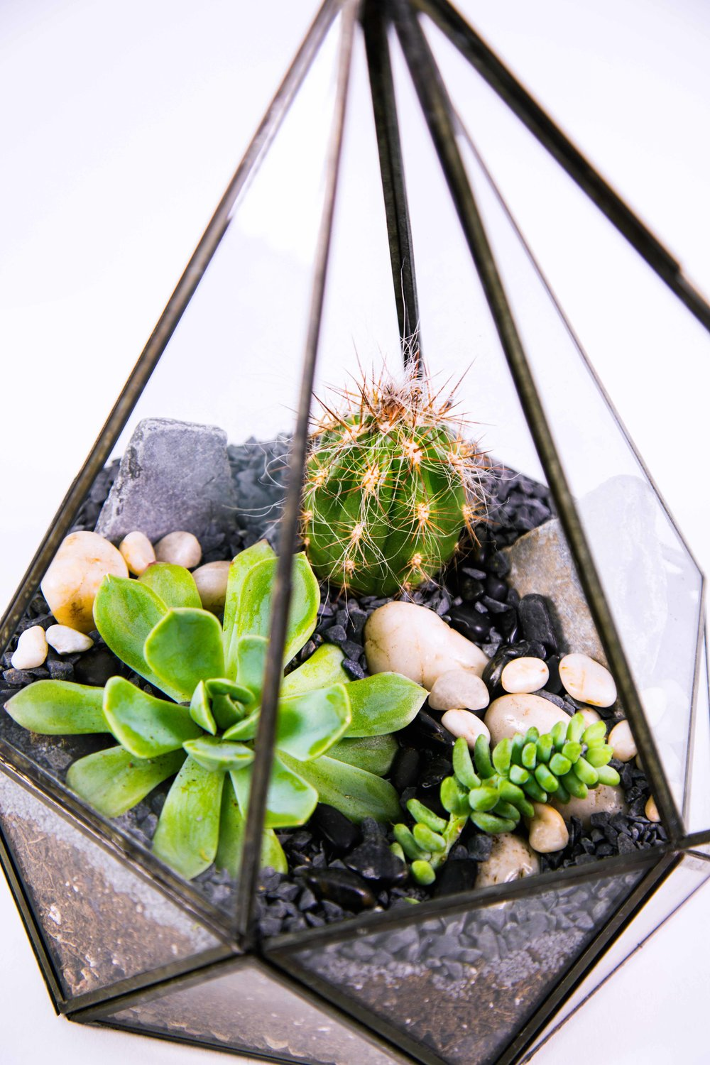 Terrariums Mar.11th-5.jpg
