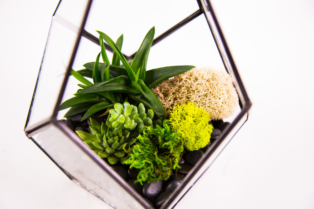 Terrariums Mar.11th-33.jpg