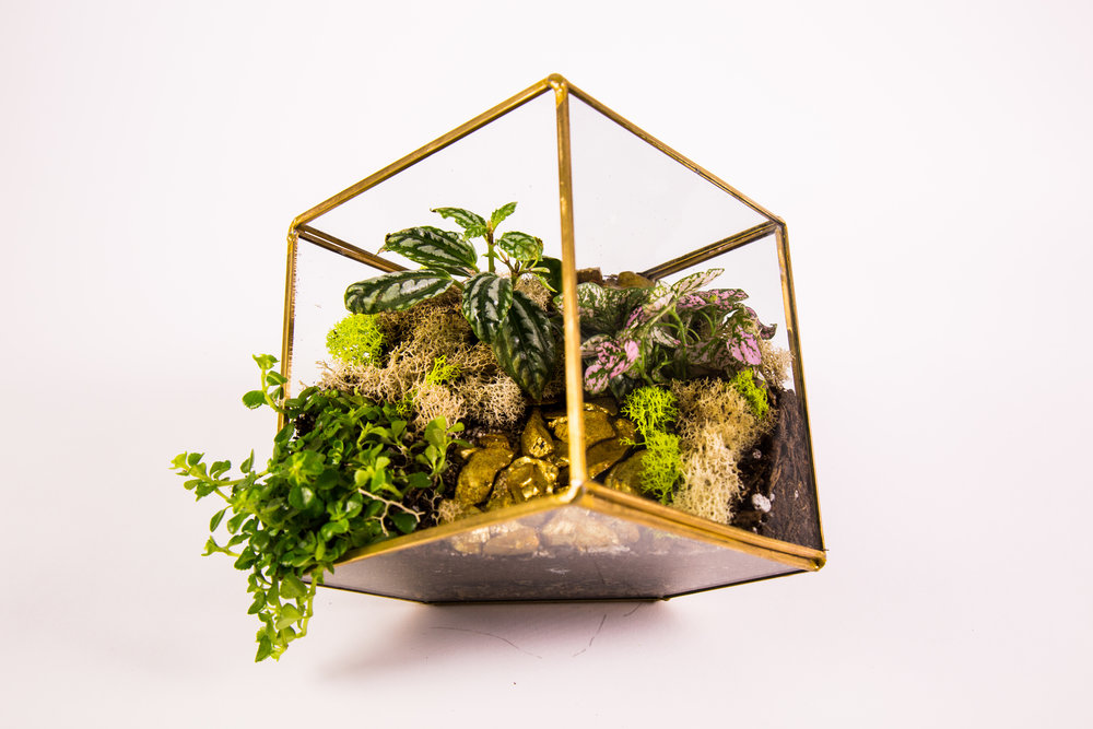 Terrariums Mar.11th-30.jpg