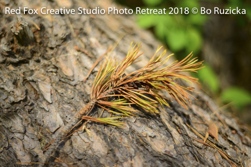 red fox creative studio - photo retreat 2018-5696.jpg