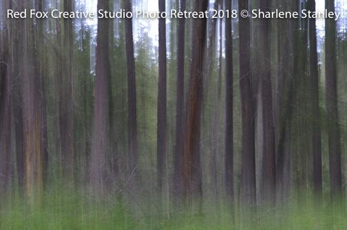 red fox creative studio - photo retreat 2018-6708.jpg