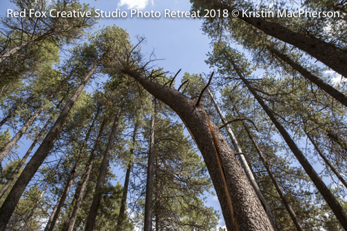 red fox creative studio - photo retreat 2018-6951.jpg