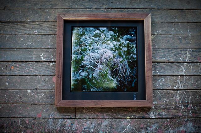 FIRST FRIDAY, tonight!  I finally have photographs up on the Mendocino Coast!  Salvaged wood frames, archival 120mm photographs.  I'll be a guest member of Northcoast Artists Gallery(located downstairs of Triangle Tattoo) for the next 6 months.  Come hang, free wine & snax 5-8pm!  #mediumformat #portra160 #120mm #theanalogueproject #salvagedwood