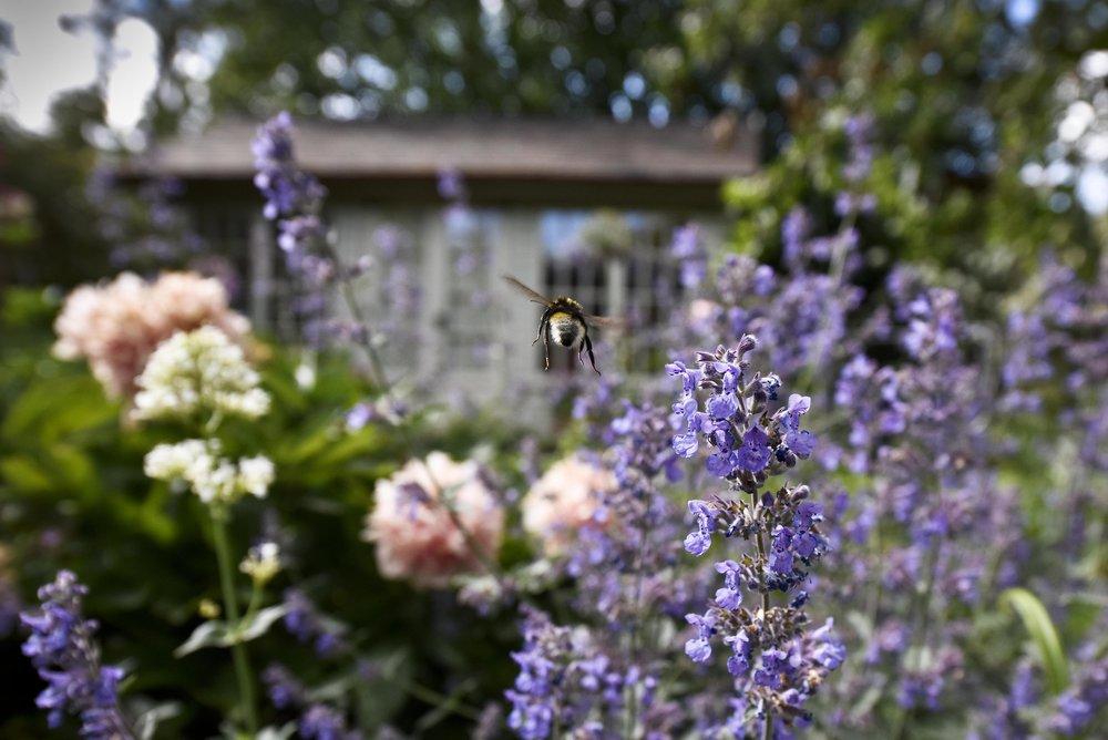 Bee Flight copy.jpg