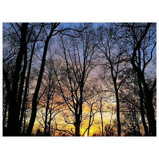 Some more trees and another sunset #trees #sunset