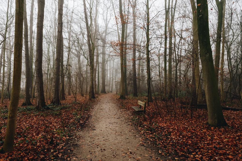 Utrecht Forest Paths