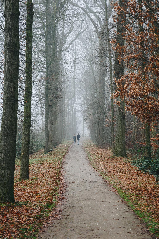 Utrech NL • Forest Walks