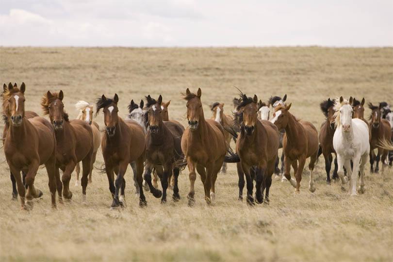 Herd-2.jpg