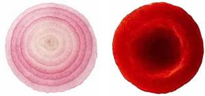 onion-cell.jpg