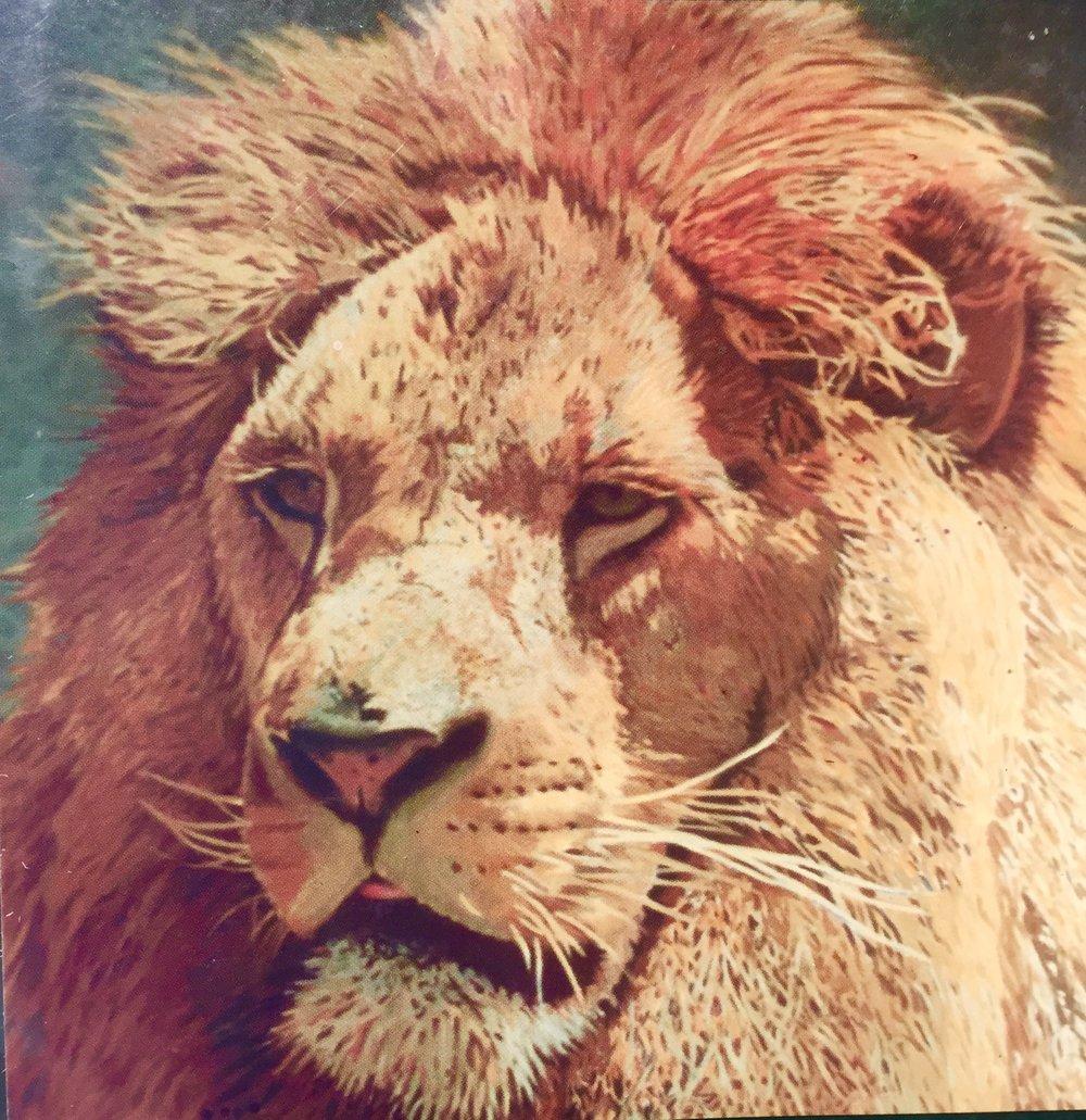 St Leo's Lion 3.jpg