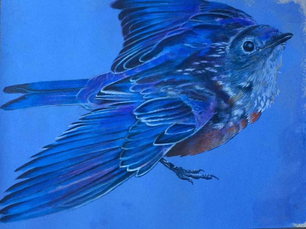 "Title: ""Blue Bird"" 2018    Media: Acrylics on Pelon    Dimensions: 14"" x 14""    Collection of: The Artist"