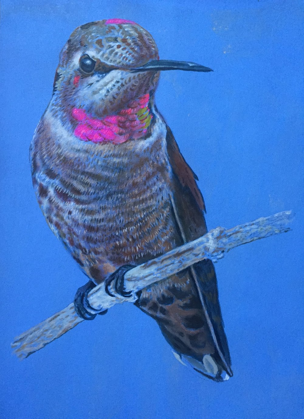"Title: ""Humming Bird"" 2018    Media: Acrylics on Pelon    Dimensions: 14"" x 14""    Collection of: The Artist"