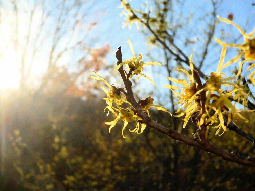 Boulder-CO-Flower.jpg