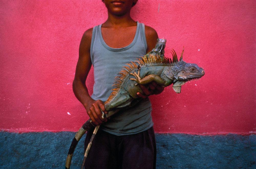 Jeffrey Becom,Boy with Iguanas, Kilómetro Trienta, Colón, Honduras, 1995 Silver dye bleach print 10 of 25 18 x 22 inches $400
