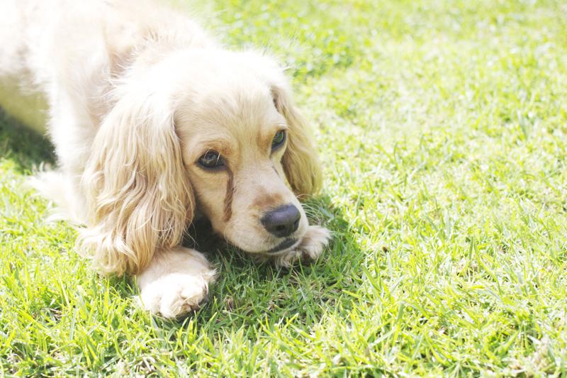 J for Jamie Blog | Fritz the dog.