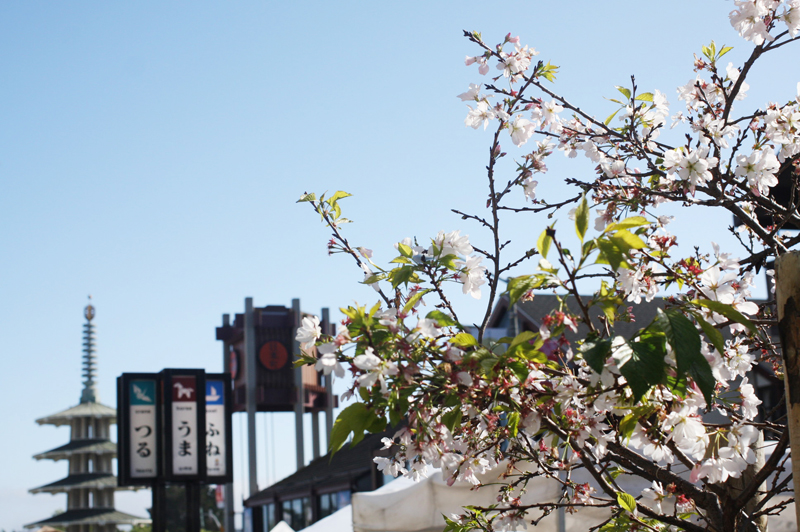 J for Jamie Blog | SF Cherry Blossom Festival