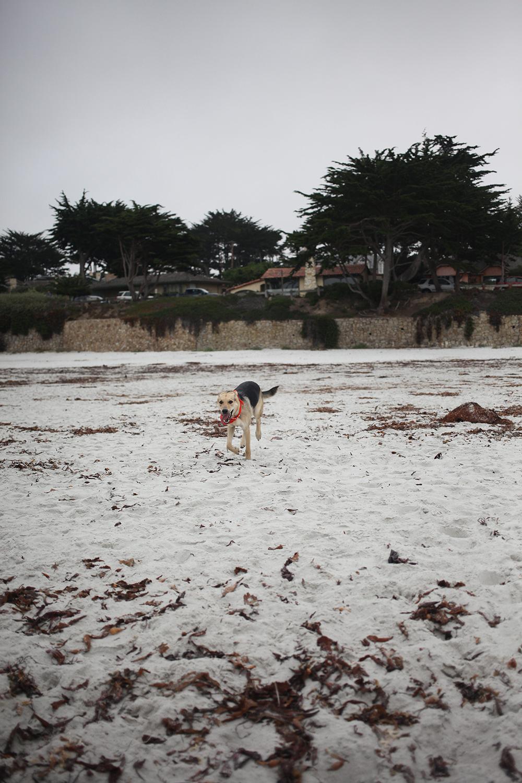 J for Jamie Blog | Carmel by the Sea