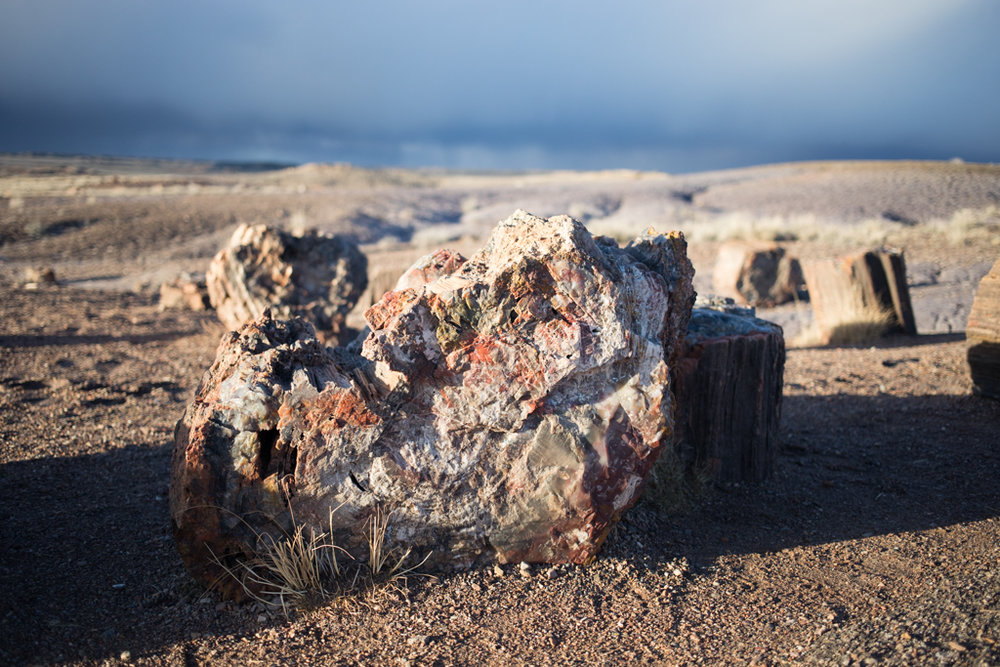 J for Jamie Blog | Petrified Forest