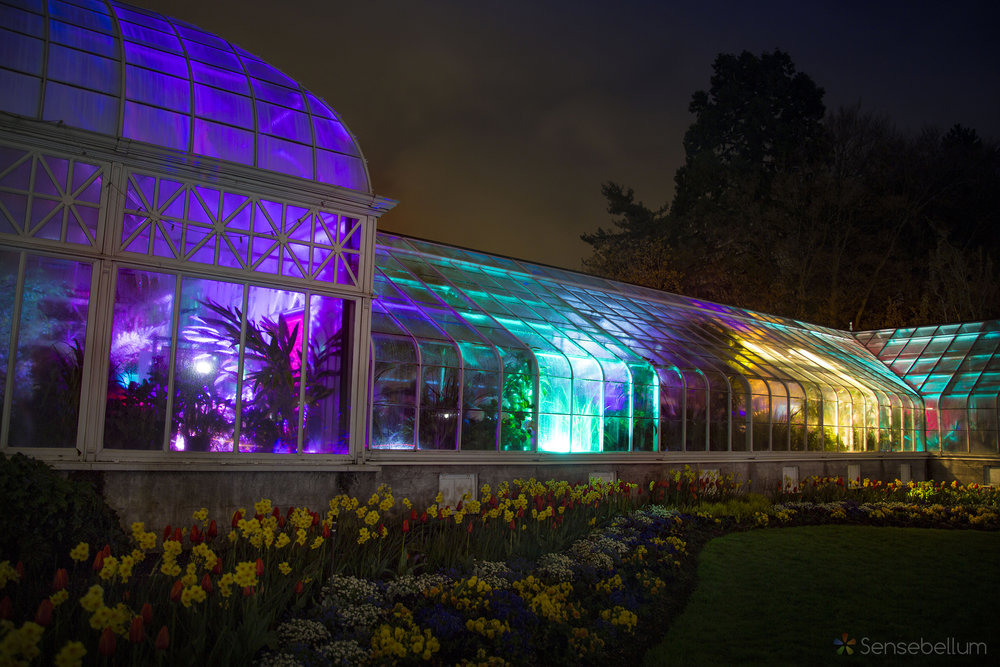 LUSIO Lights Sensebellum Seattle Conservatory Volunteer Park Interactive Art Lights Augmented Reality Projection Mapping 46 copy.jpg
