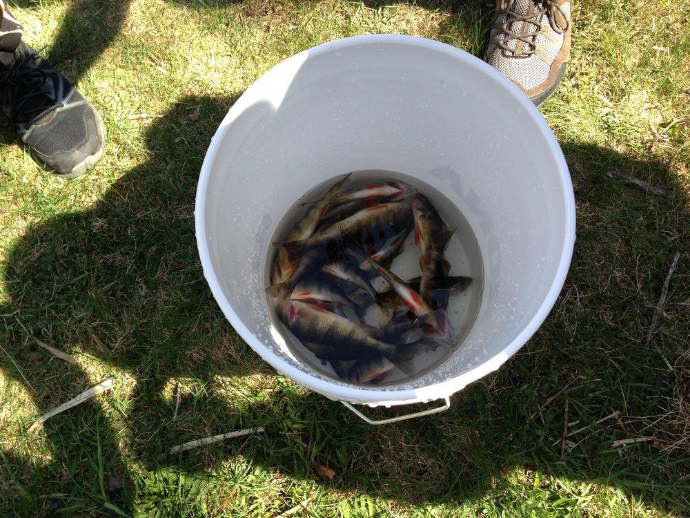 Le résultat de quelques heures de pêche.