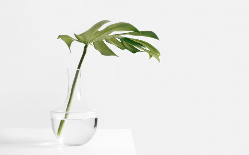 wellness webdesign for alternative & holistic medicine companies.png