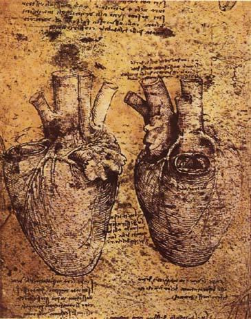 Heart and its blood vessels, by Leonardo Da Vinci.{{ PD-US }}