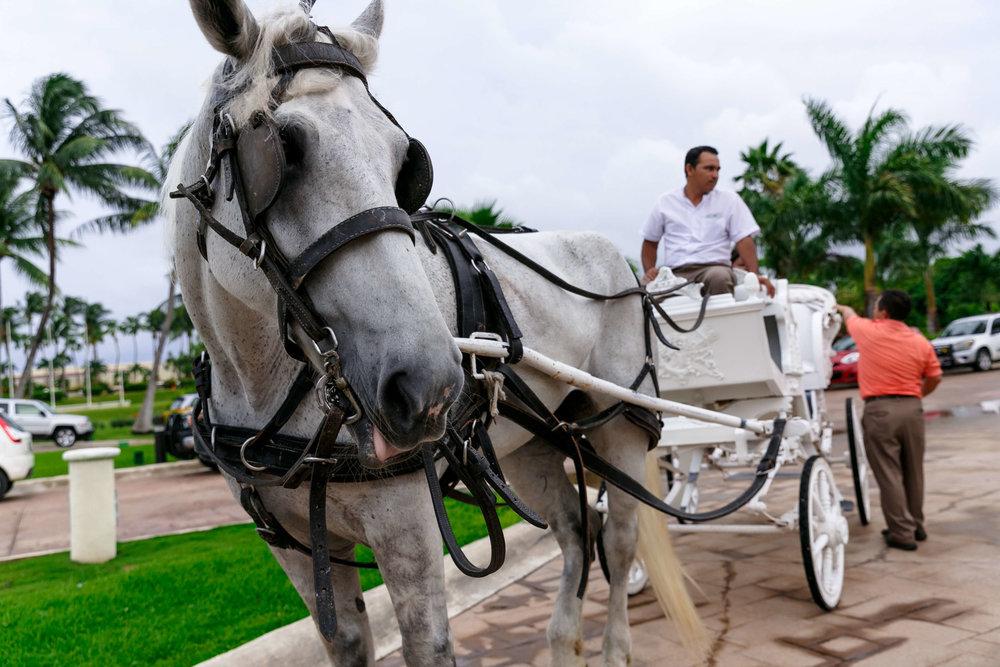 tressa-how-to-plan-a-destination-wedding-in-cancun-mexico-moon-palace-resort-black-destination-bride-destiland-desti-guide-to-destination-weddings-beach-wedding-carriage.jpg