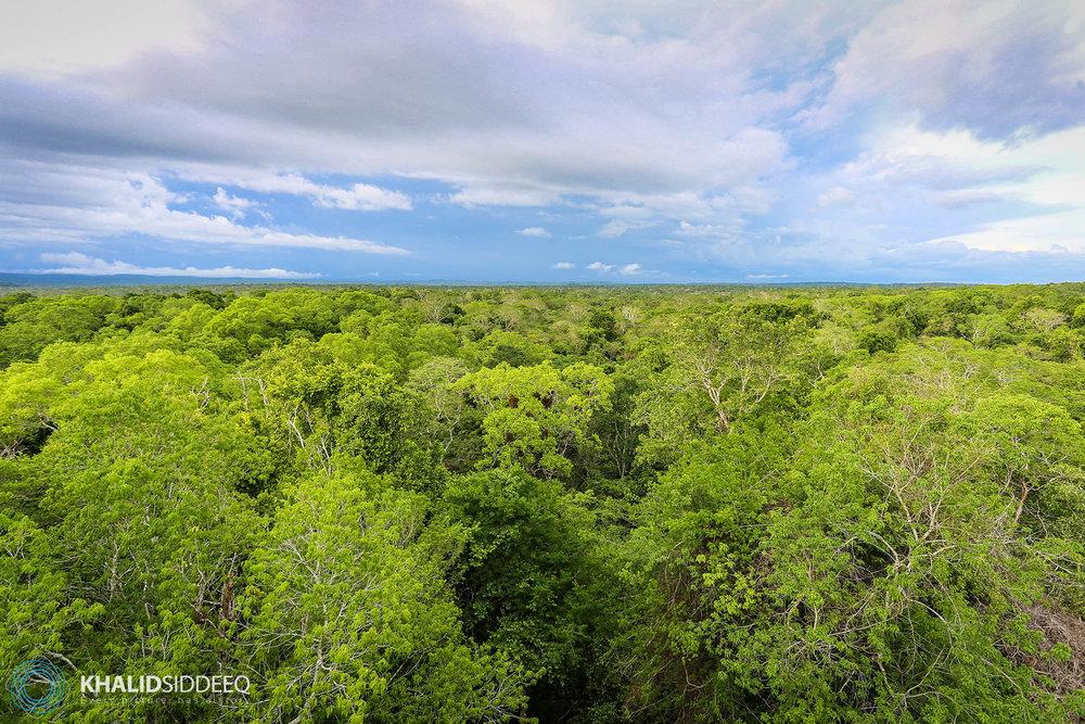 Yaxha Forest, Guatemala - غابات ياهسا، جواتيمالا