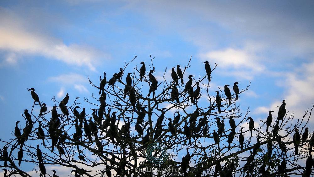 Amazonas 8.jpg