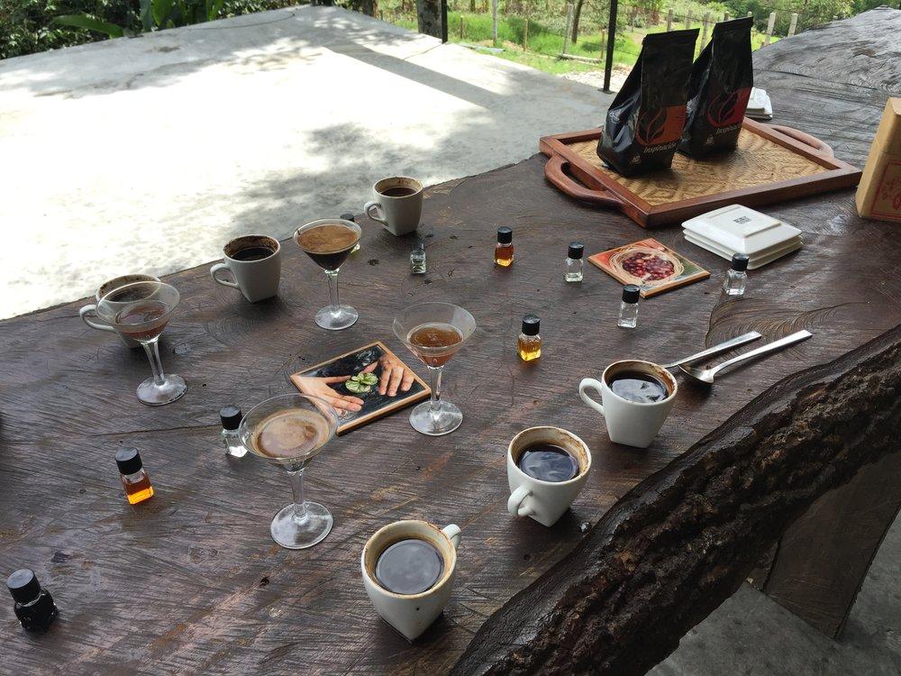 اختبار تذوق القهوة وتجربتها