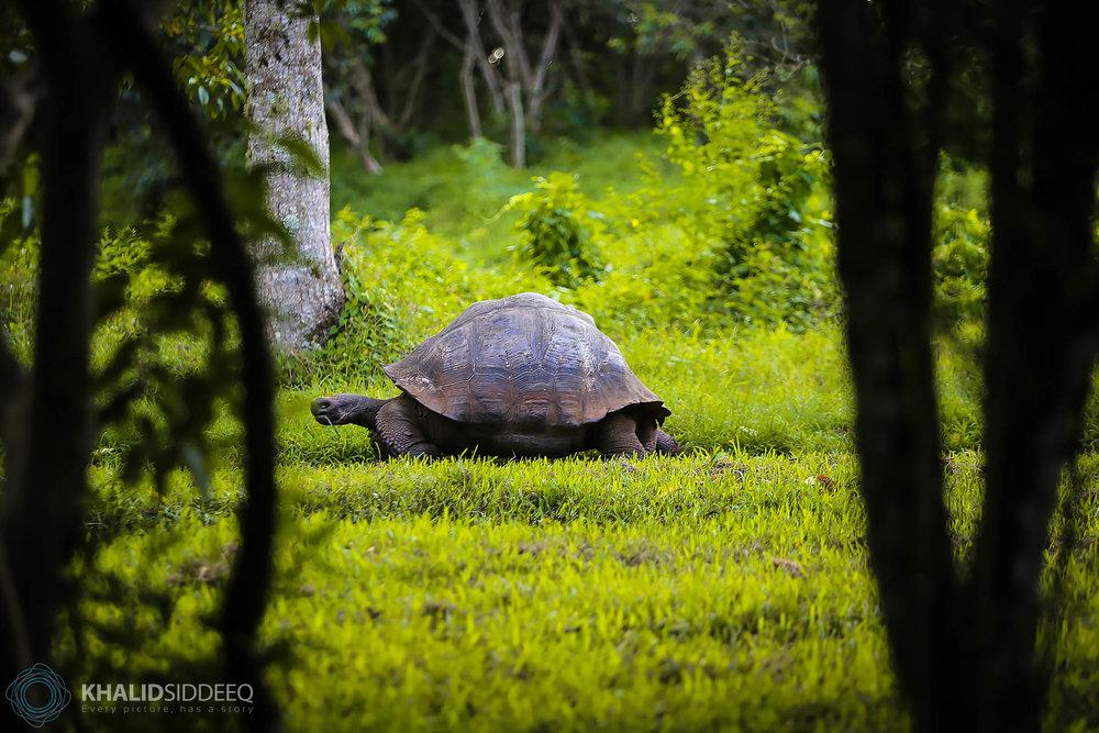 Galápagos-3.jpg