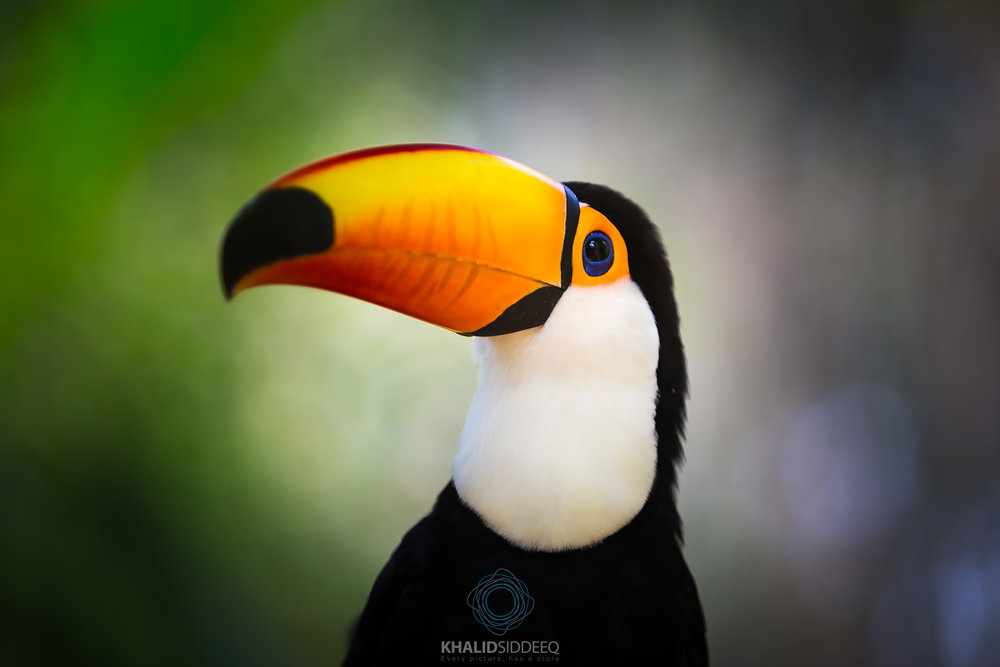 Iguacu-8.jpg