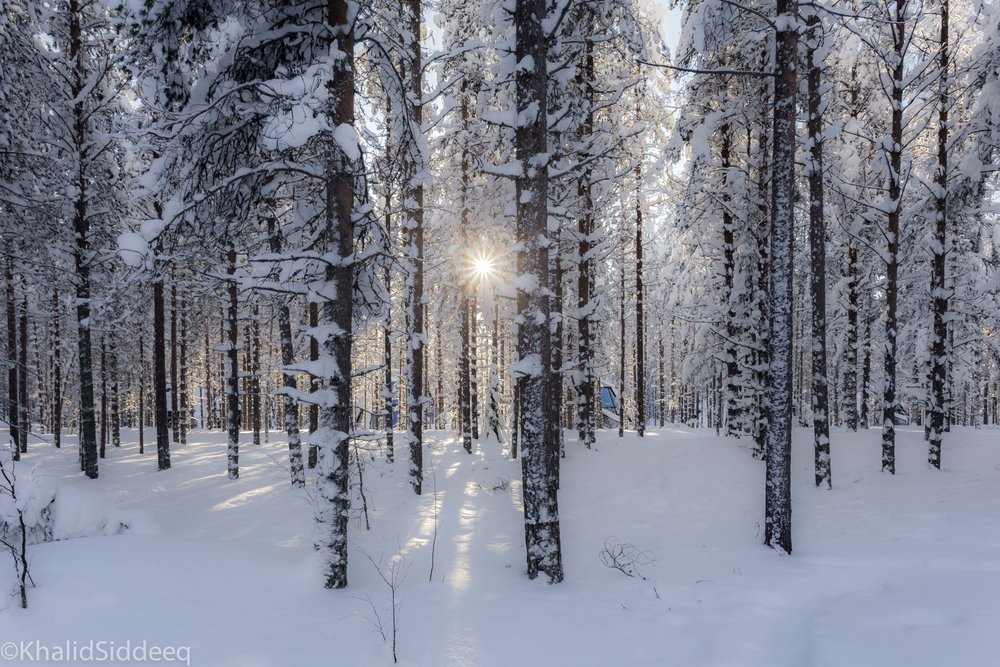 شتاء فنلندا