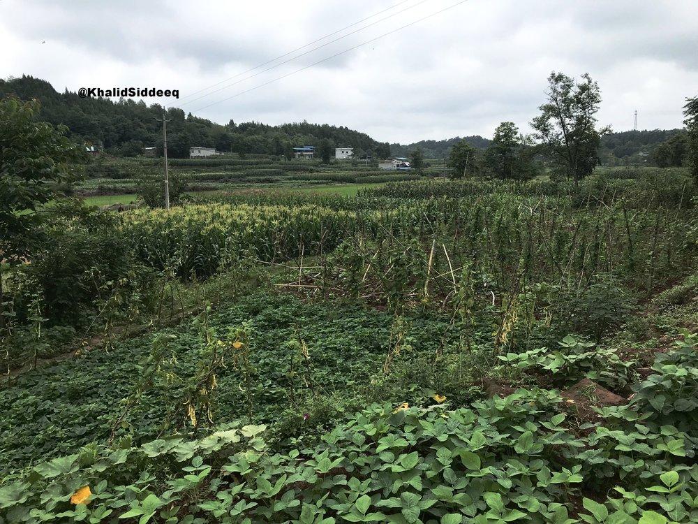 مزارع القرية